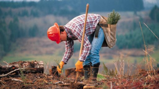 3log Silviculture Manager Module Forestry Timber And Wood