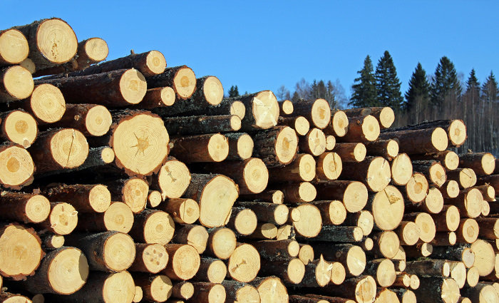 3log Softwood Us Forestry Timber And Wood Products